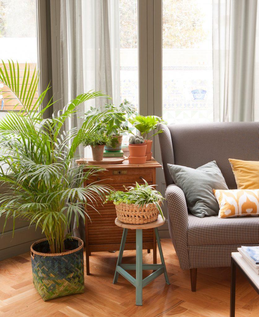 ¿Sabes por qué resulta tan importante añadir las plantas en la decoración de nuestros hogares? ¿Y en especial en zonas de trabajo? Mobile Diseño