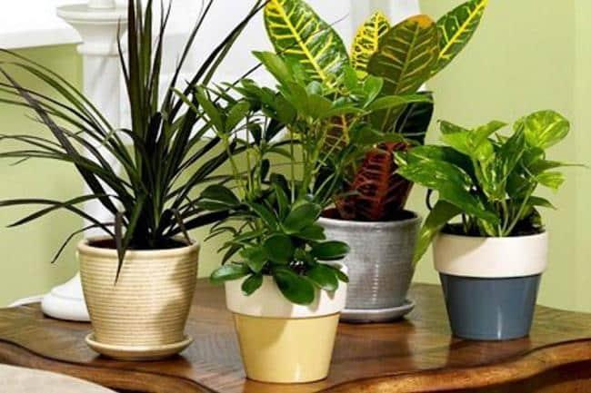 ¿Sabes por qué resulta tan importante añadir las plantas en la decoración de nuestros hogares? ¿Y en especial en zonas de trabajo?